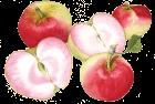 Pink Pearl apple