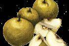 Honsui asian pear