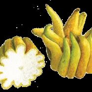 Buddha's Hand citrus