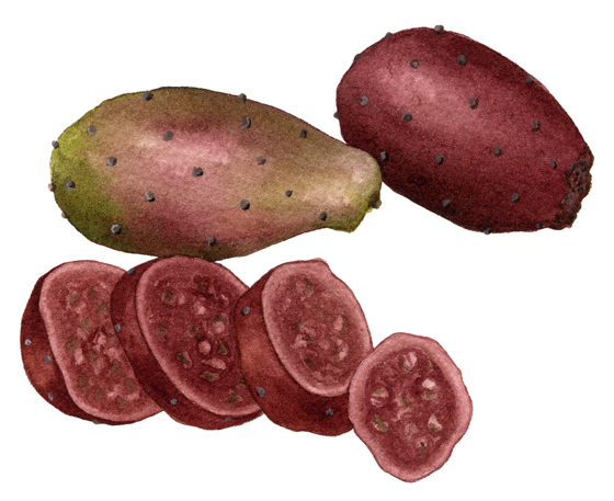 Cactus-Pear