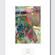 Berkeley Hort CA Wild Grape poster