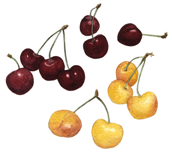 Cherries-'Bing'-+-'Ranier'