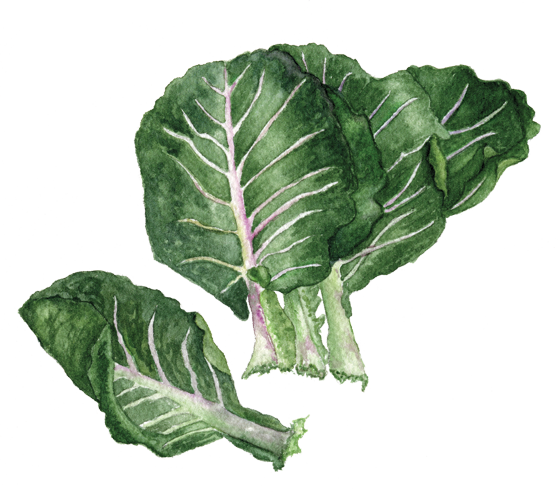Collards-'Flash'