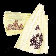 Corn husks, Borlotti + Anasazi beans