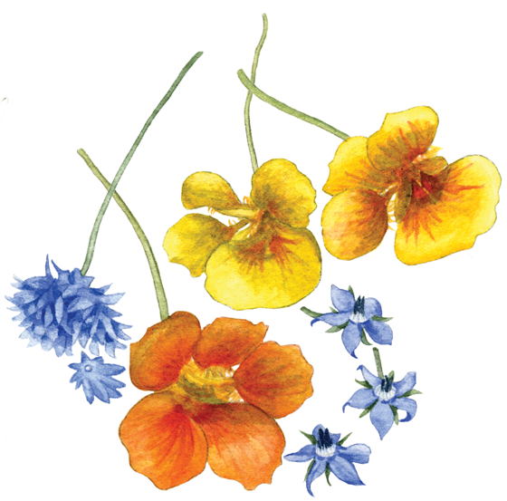 Edible-flowers-'Cornflower,-Nasturtium-&-Borage'