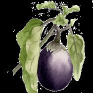 Belleza de Nera eggplant