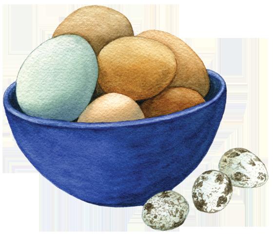 Eggs-'Araucana',-brown-+-quail