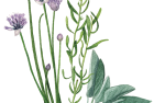 Fresh herbs: chives, tarragon + sage