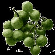 Green Grape cherry tomato