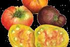 Heirloom beefsteak tomatoes