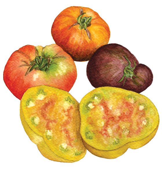 Heirloom-beefsteak-tomatoes