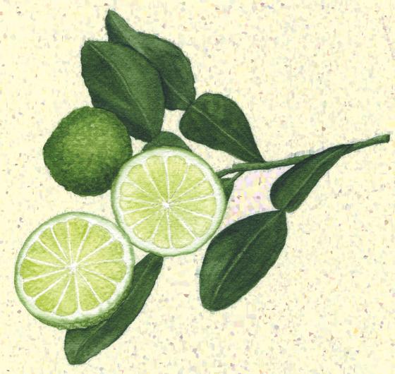 Lime-'Makrut'