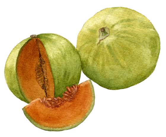 Melon-'Charentais'