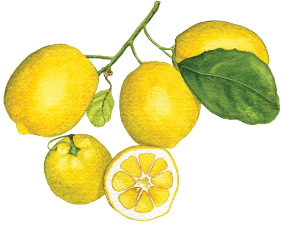 Meyer-lemon