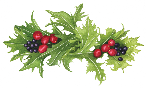 Mizuna,-cranberries-&-coastal-huckleberries