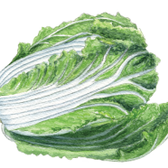 Blues nappa cabbage