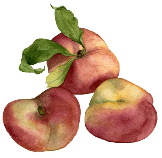 Peach---Yen-Yen'