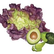 Red Cross butter lettuce & Hass avocado