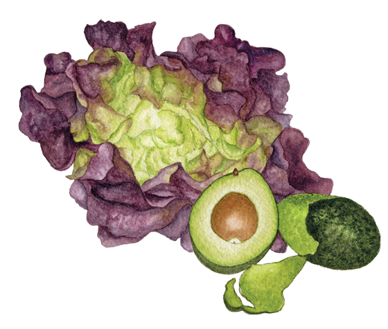 'Red-Cross'-butter-lettuce-+-Hass-avocado