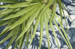 Rock palm