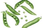 Green Arrow shelling peas
