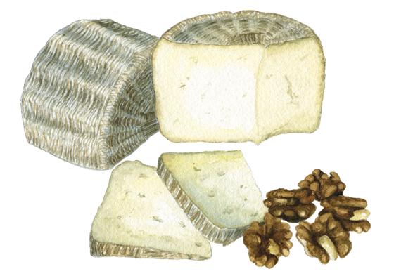 Shepherdista-sheep-cheese