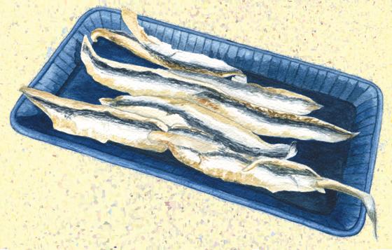 Spanish-boquerone-anchovies
