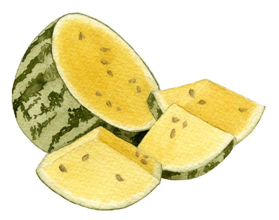 Watermelon-'Early-Moonbeam'
