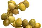 Yellow dates