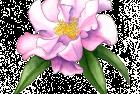 Buddha camellia