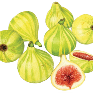 Candy-stripe figs