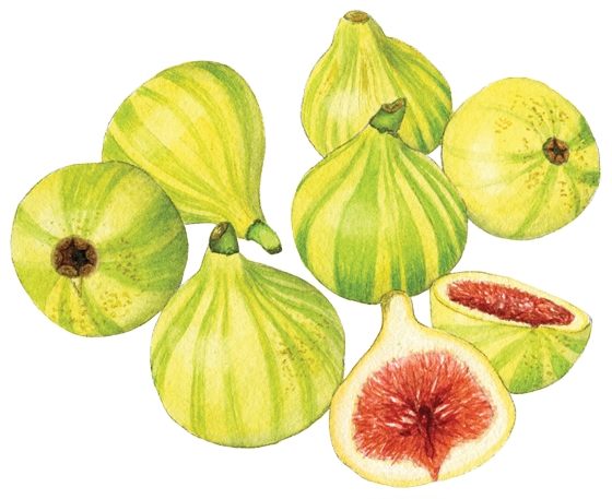 candy-stripe-figs
