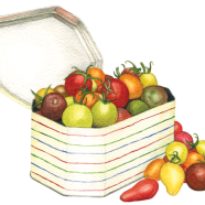 Cherry tomatoes in a tin