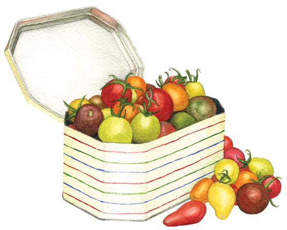 cherry-tomatoes-in-a-tin