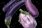 Eggplant: Shoya, Neon + Listada de Gandia
