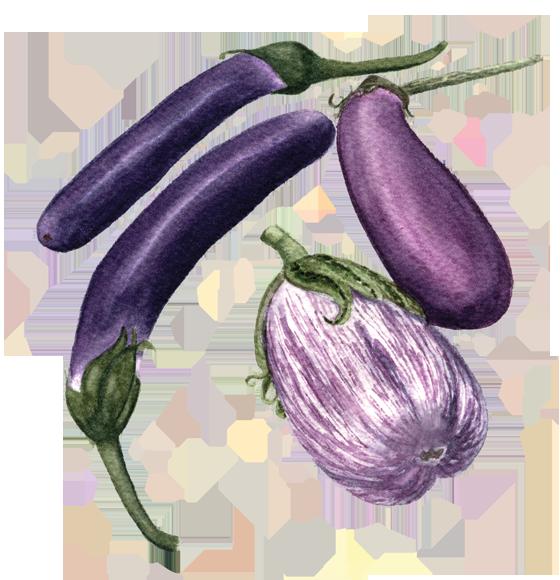 eggplant 'Shoya' 'Neon' + 'Listada de Gandia'
