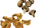 Mushrooms: chantarelle + shiitake