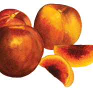 Red Summer nectarine