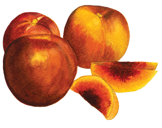 nectarine-'Summer-Red'