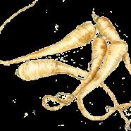 Albion parsnip