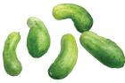 Little Leaf pickling cucumbers