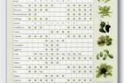 Vegetable Planting Calendar