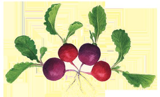 radish-'Easter-Egg'