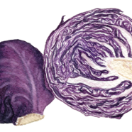 Red Express cabbage