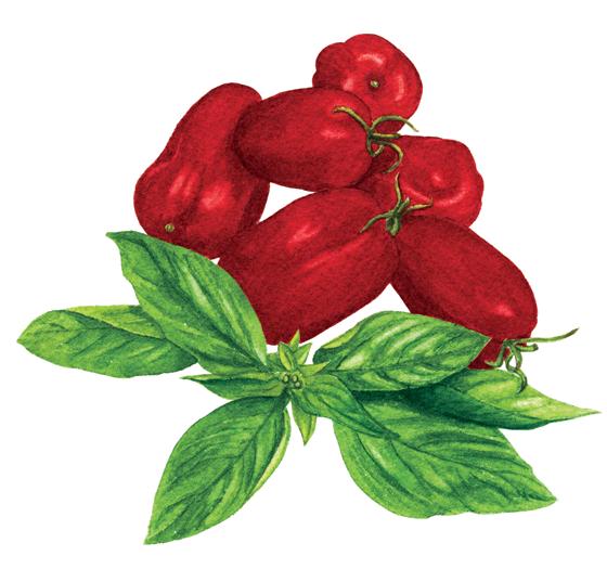 san-marzano-+-Genovese-basil