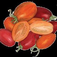 Tomatoes: Enchantment + Orange Banana