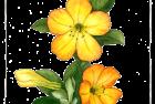 George Budgen vireya rhododendron