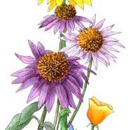 bee friendly flowers