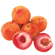 Indian Blood Peaches