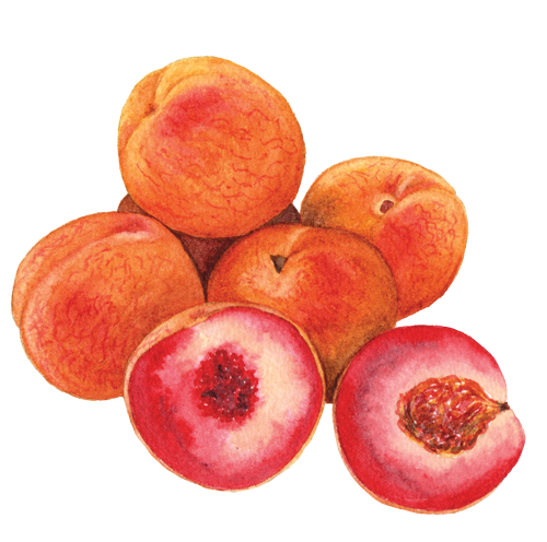 Indian-Blood-peaches